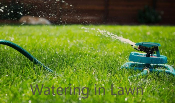 Frequent Watering in Lawn