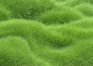 Lawn Care Tips | Extra Lawn Grass